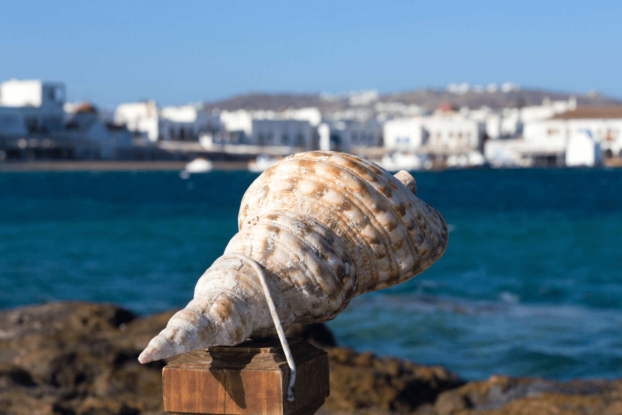 Shell in Mykonos Chora