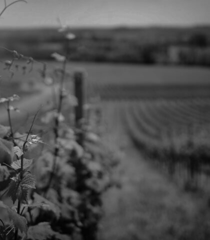 Tuscany Wine Producing – An Exciting Journey Full of Flavours & Aromas!
