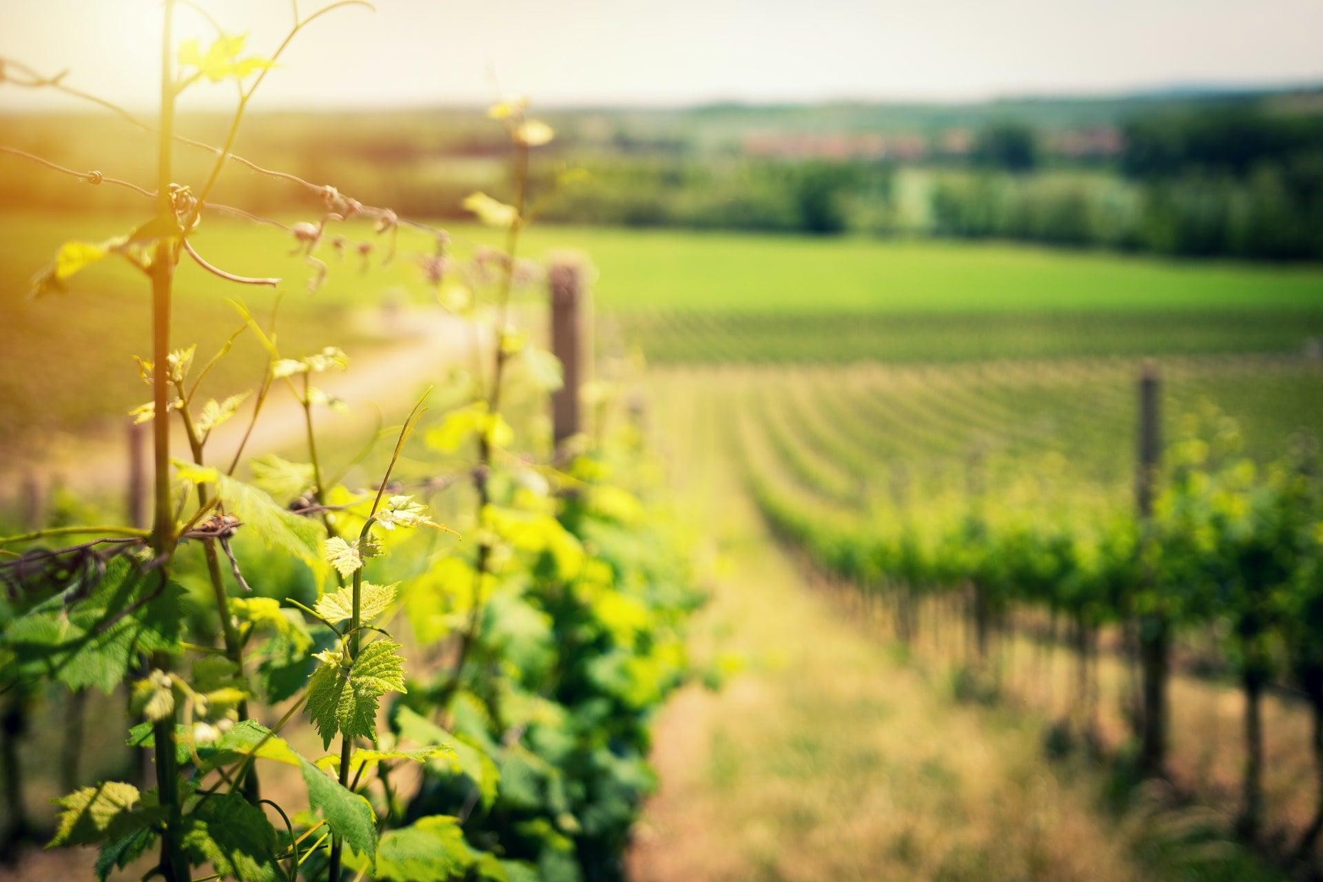 tuscany-wine-growing-areas-min