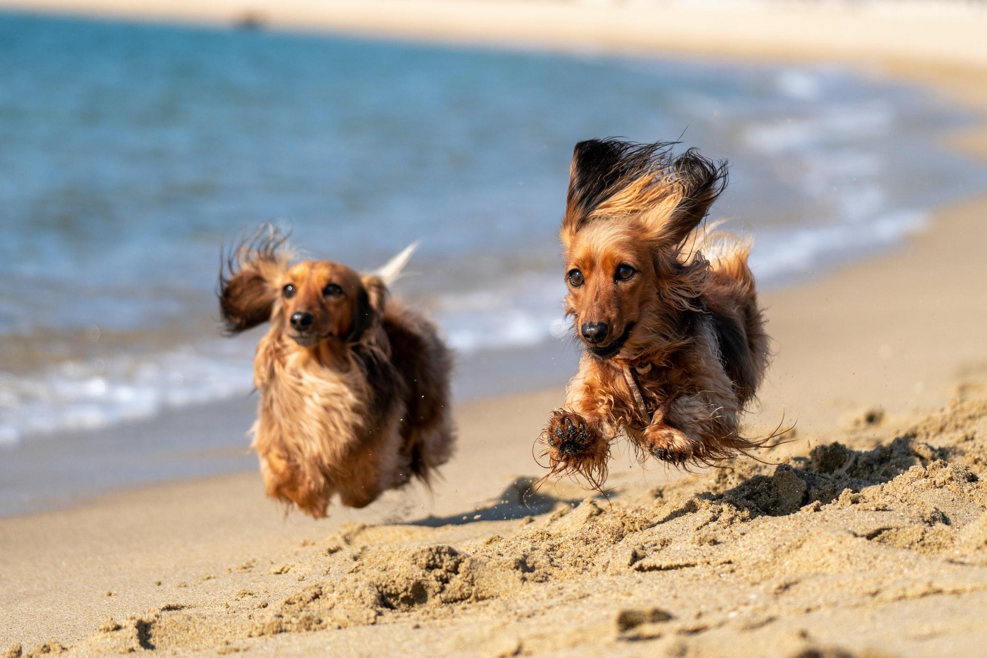 tuscany beach dogs